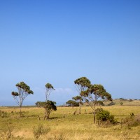 African Trees along the Road