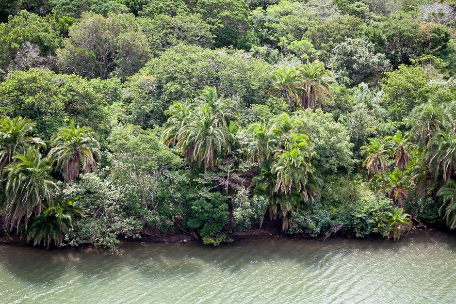 Palm Trees at Mzamba River