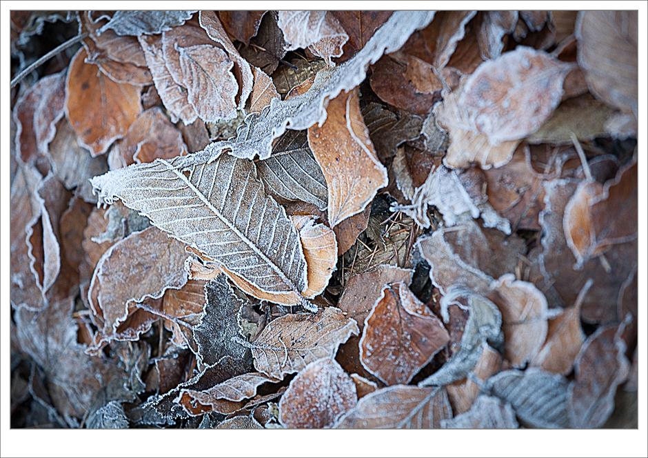 Laub, Blätter, Blätter im Herbst